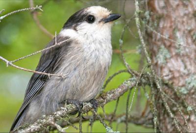 Great Adirondack Birding Celebration