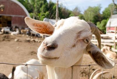 Thurman Fall Farm Tour