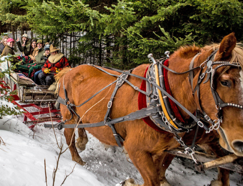 Horse-drawn Adirondack Sleigh Rides