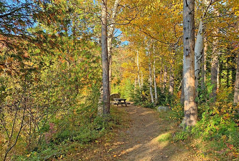 Lake Stevens Woods